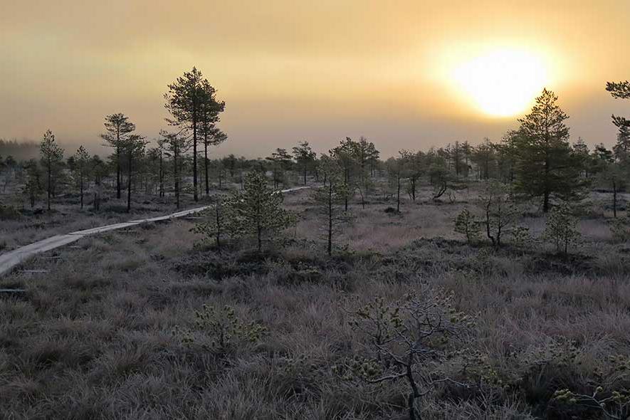 lähistöltä löytyy myös useita kansallispuistoja joista torronsuo on niistä yksi
